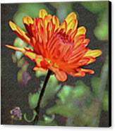 First Mum For Fall Canvas Print by Sandi OReilly