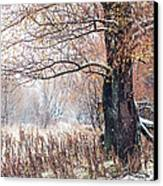 First Snow. Old Tree Canvas Print by Jenny Rainbow