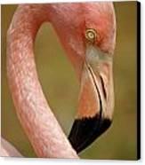 Flamingo Head Canvas Print