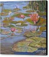 Floating Lillies Canvas Print by Mohamed Hirji