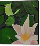Floating Lotus 2 Canvas Print by Holly Donohoe