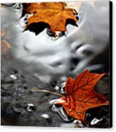 Floating Maple Leaves Canvas Print