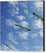 Flock Of Five Seagulls Flying In The Sky Canvas Print by Sami Sarkis