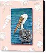 Florida Pelican With Seashell Border Canvas Print by Peggy Dreher