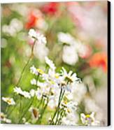 Flower Meadow Canvas Print by Elena Elisseeva