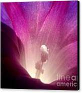 Flower Univers Canvas Print by Valia Bradshaw