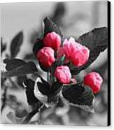 Flowering Crabtree In Select Color Canvas Print by Mark J Seefeldt