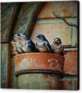 Flowerpot Swallows Canvas Print by Jai Johnson
