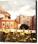 Flowers - High Line Park - New York City Canvas Print