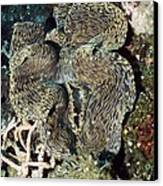 Fluted Giant Clam Canvas Print by Georgette Douwma