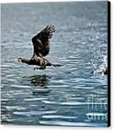 Flying Cormorant Bird Canvas Print by Mats Silvan