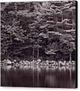 Forest At Jordan Pond Acadia Bw Canvas Print
