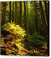 Forest Canvas Print by Matt  Trimble