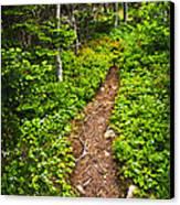 Forest Path In Newfoundland Canvas Print by Elena Elisseeva