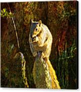 Fox Squirrel Sitting On Cypress Knee Canvas Print