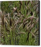 Fox Tail Grass Canvas Print by Grover Woessner
