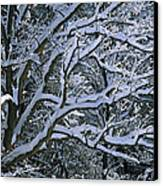 Fresh Snowfall Blankets Tree Branches Canvas Print