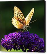 Fritillary Butterfly On Butterfly Bush, Near Madoc, Ontario, Canada Canvas Print by Janet Foster