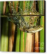 Frog Jumps Into Water Canvas Print