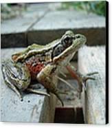 Frog Canvas Print by Sophia Petersen