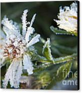 Frostbite Flower Canvas Print by Darleen Stry