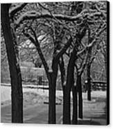 Frosted Trees Canvas Print by Artist Orange
