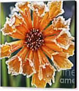 Frosty Flower Canvas Print by Elena Elisseeva