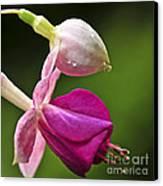 Fuchsia Flower Canvas Print