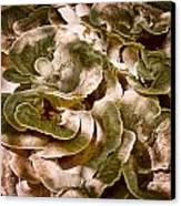 Fungus Swirl Canvas Print by Michael Putnam