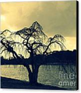 Furman Lake Tree Canvas Print