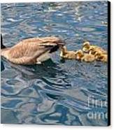 Fuzzy Babies Canvas Print by D Nigon