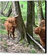Fuzzy Cows Canvas Print by Bob Jackson