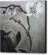 Galen's Orchid Canvas Print by Estephy Sabin Figueroa