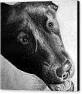 Gannon Canvas Print by Michael Ringwalt