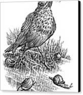 Garden Bird Catching Snails, Artwork Canvas Print by Bill Sanderson