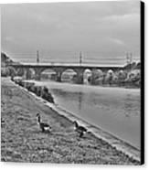 Geese Along The Schuylkill River Canvas Print