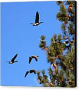 Geese In Tahoe Canvas Print by Ernie Claudio