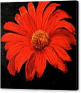 Gerbera Canvas Print by Heather Matthews
