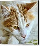 Ginger Canvas Print by Imagevixen Photography