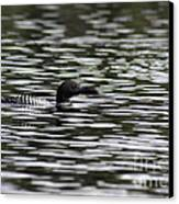 Gliding Loon Canvas Print by Chris Hill