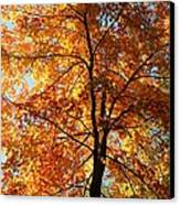 Glory Of Autumn Canvas Print by Jennifer Compton