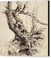 Gnarled Tree Trunk Canvas Print