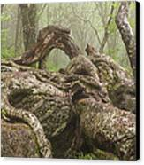 Gnarly Old Tree In Fog Along The Blue Ridge Parkway Canvas Print by Bill Swindaman