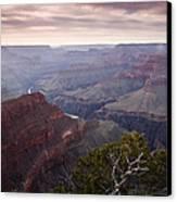 Gnarly Tree In The Canyon Canvas Print