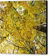 Golden Canopy Canvas Print by Rick Berk