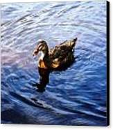 Golden Star Duck Canvas Print by Joan Meyland