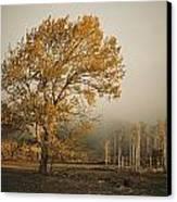 Golden Sunlit Tree With Mist, Yakima Canvas Print