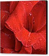 Gorgeous Glads Canvas Print by Susan Herber