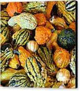 Gourdgeous Canvas Print by Kevin Fortier