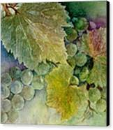 Grapes II Canvas Print by Judy Dodds